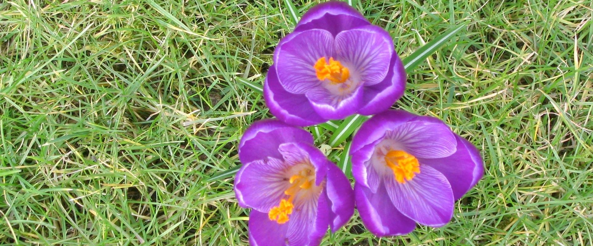 Frühlingserwachen bei Worm Wohn-design