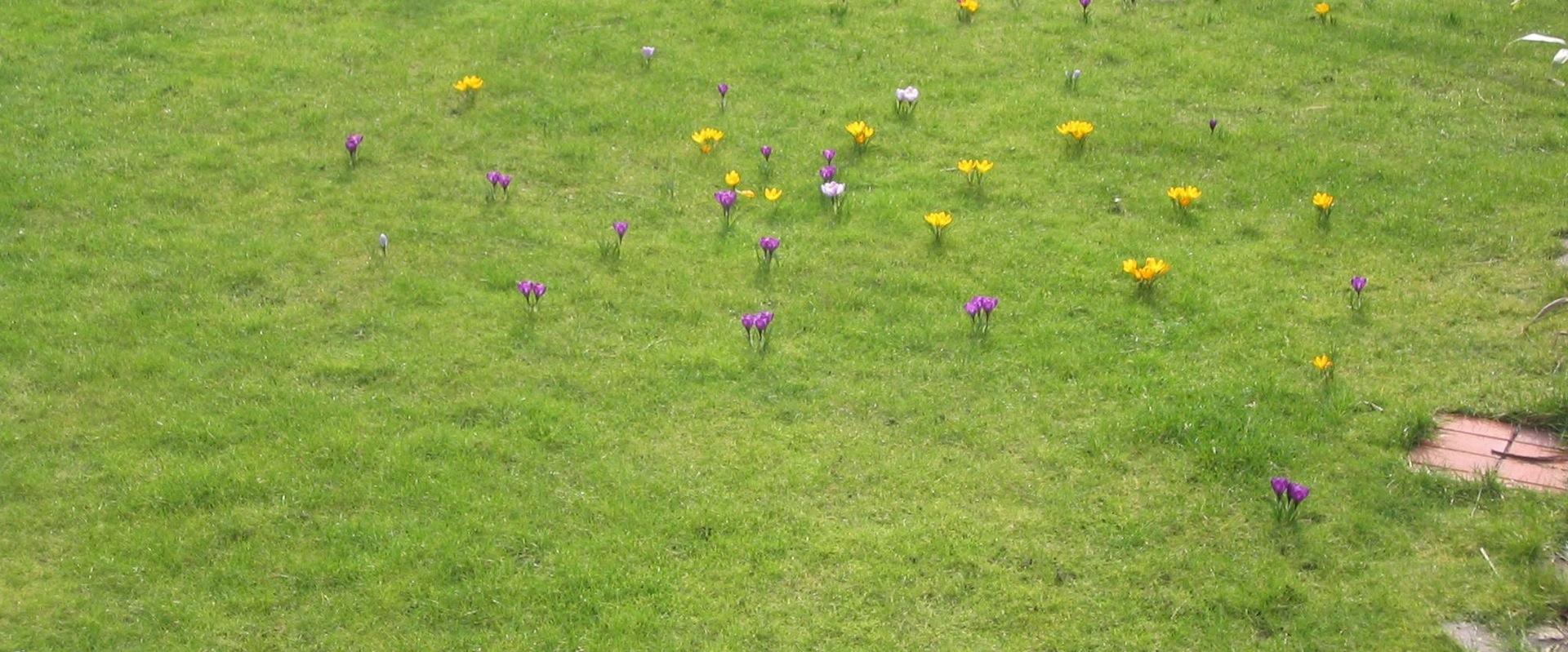 Frühling bei Worm Wohn-design